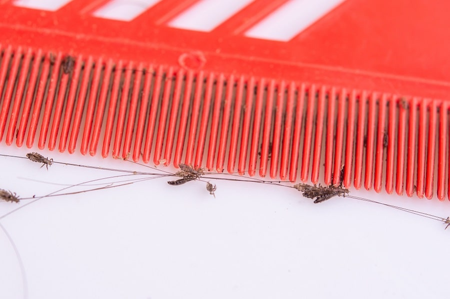Hidden Costs of At-Home Lice Treatments