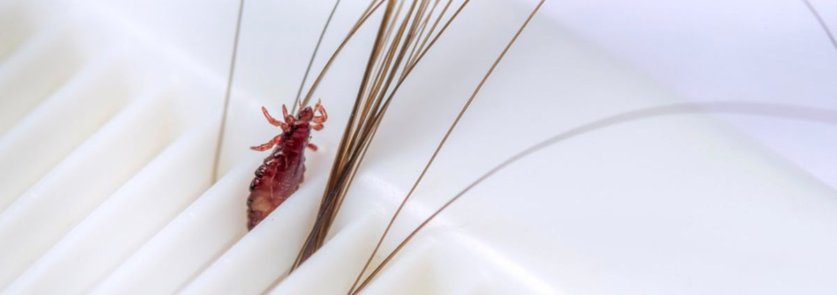 What To Do When Lice Come Back
